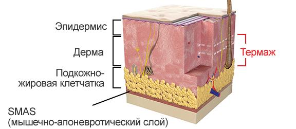 SMAS-система кожи лица