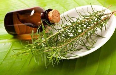 Как использовать масло чайного дерева от папиллом